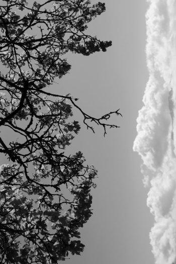Galopant vers les nuages