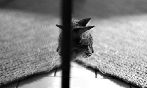 Morceaux de chats