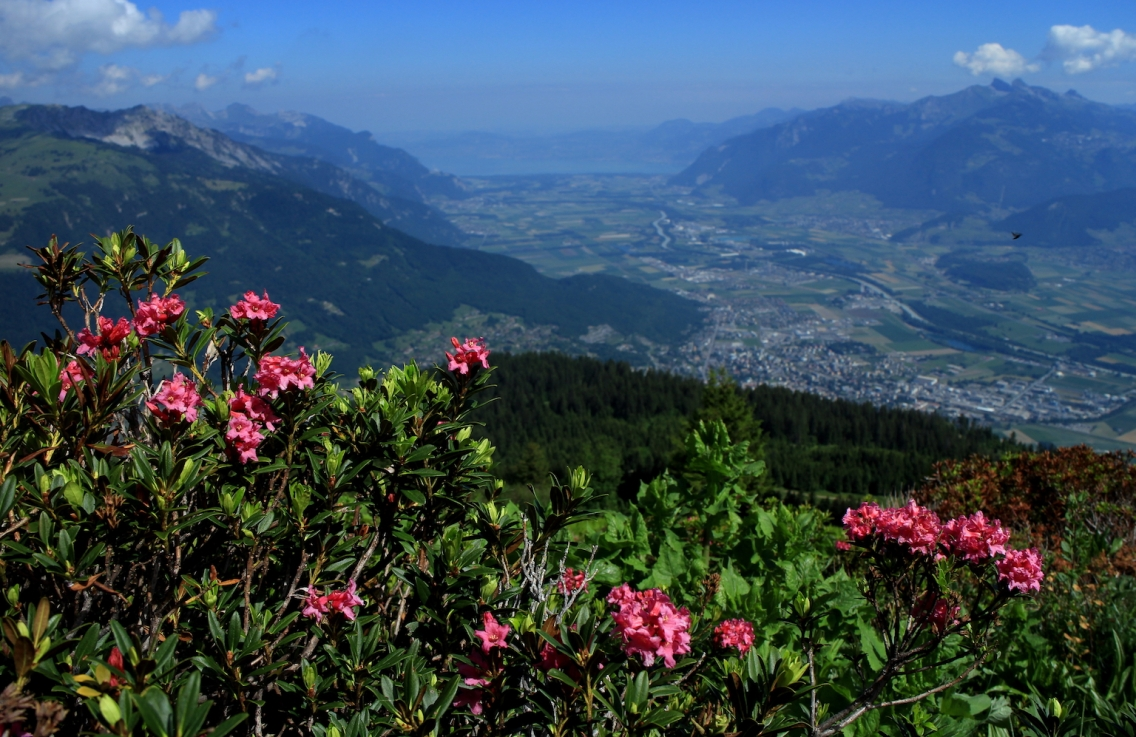 Rhododendron and Chablais