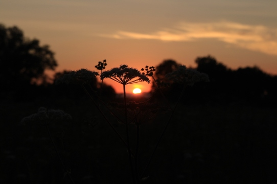 Praille Sunset